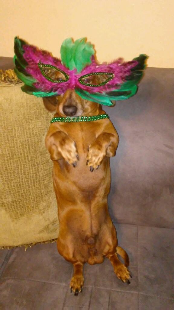 Bentley the Masked Wonder!