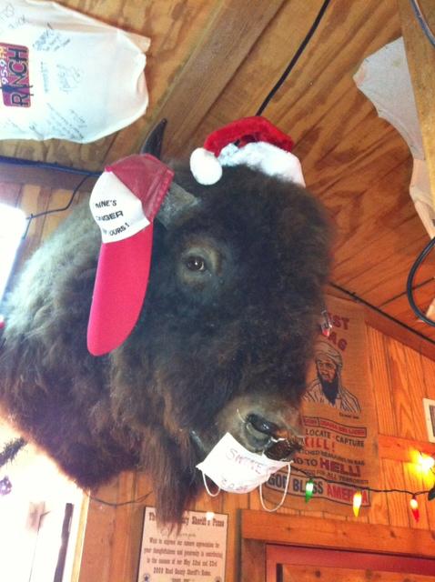 Coolest Buffalo